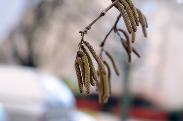 Jön a melegedés, kezdődik a pollenszezon - az allergiások bánatára (Fotó: Kecskeméti Krisztina)