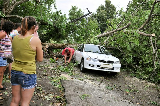 Az autókat sem kímélték a kidőlő fák (klikk a képre) Fotó: Rajki Judit