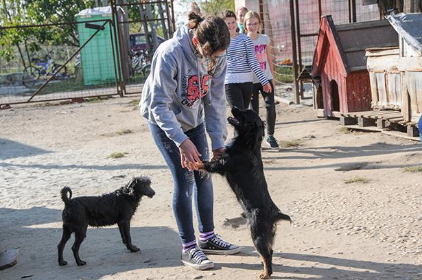 A kutyák hálásak voltak a fiatalok simogató kezeiért (Fotó: Kecskeméti Krisztina)